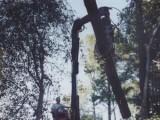 Su-Tree Service Truck