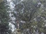 Tree Removal Su-Tree Service