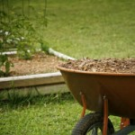 What Are the Benefits of Mulch Delivery from Tree Service Companies?