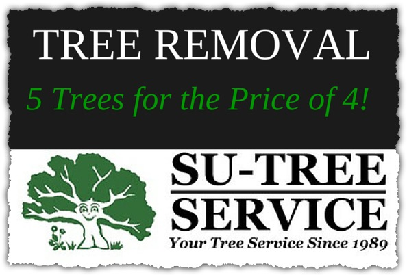 Tree Removal Discount