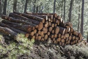 tree removal services Marietta