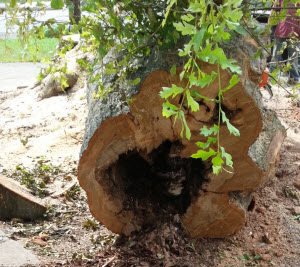tree rotting inside